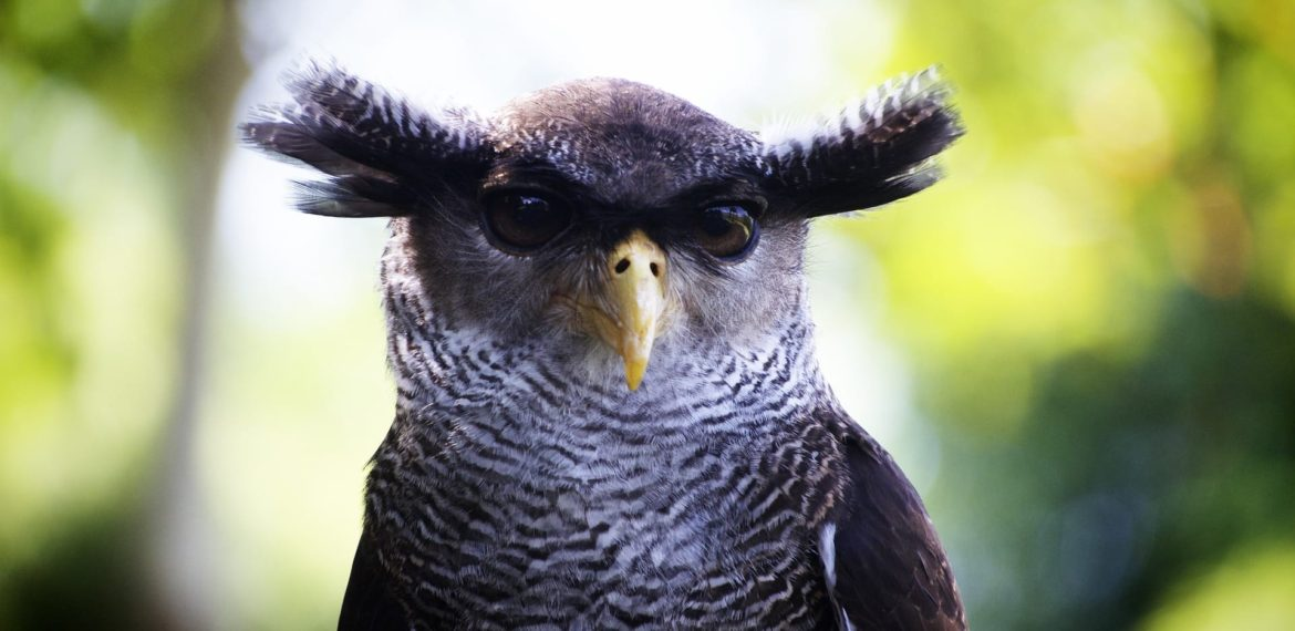 Ostrich or owl? Come check how future proof you are?