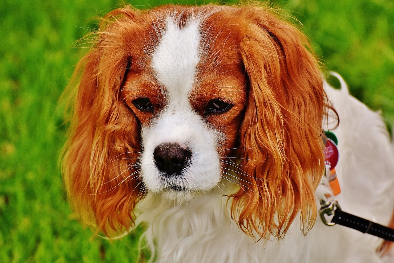 The Business Network - Chester - picture of dog